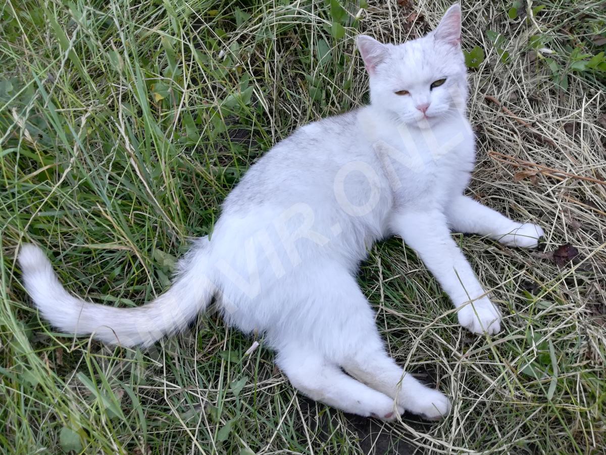 Отдам кошку. телефон +7 952 825 67 31 купить на сайте объявления Старая станица онлайн